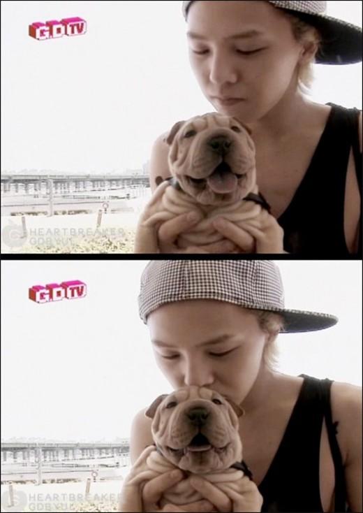 지드래곤의 '가호', 브라우니 능가하는 '아이돌 강아지' 1위