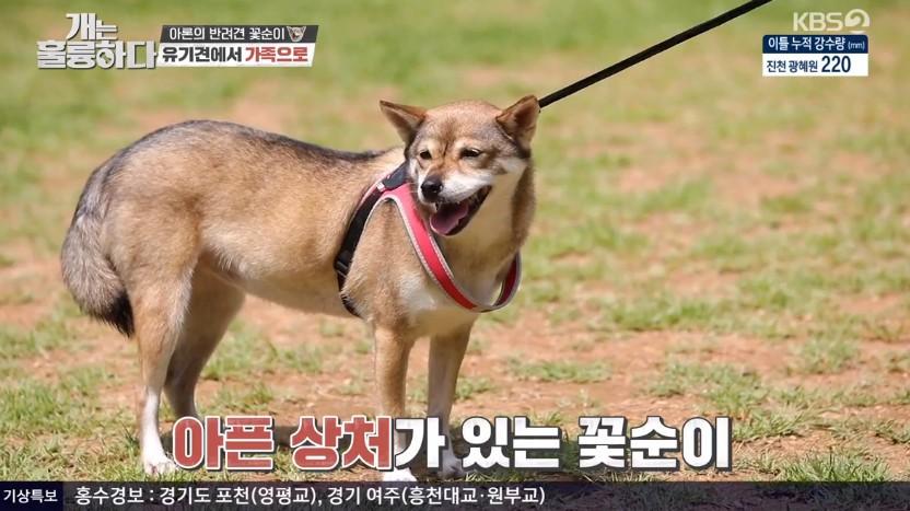 '개훌륭' 뉴이스트 아론, 유기견 출신 반려견 소개→희귀견종 살루키와 첫 만남