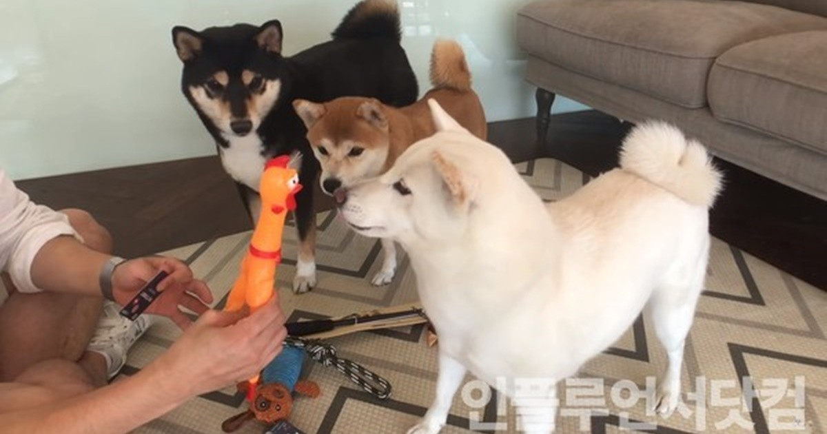 '강아지 집사'가 공개한 '강아지 장난감 고르는 꿀팁'