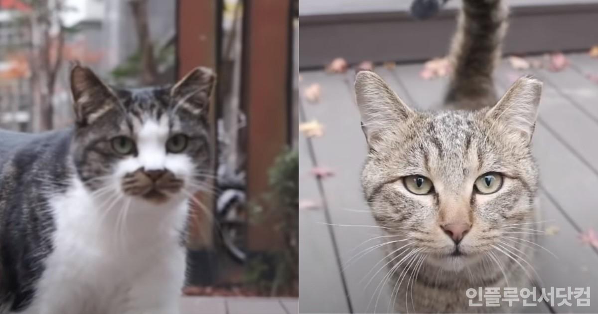 아파트에서 지내는 고양이들이 한쪽 귀가 잘려져 있는 이유
