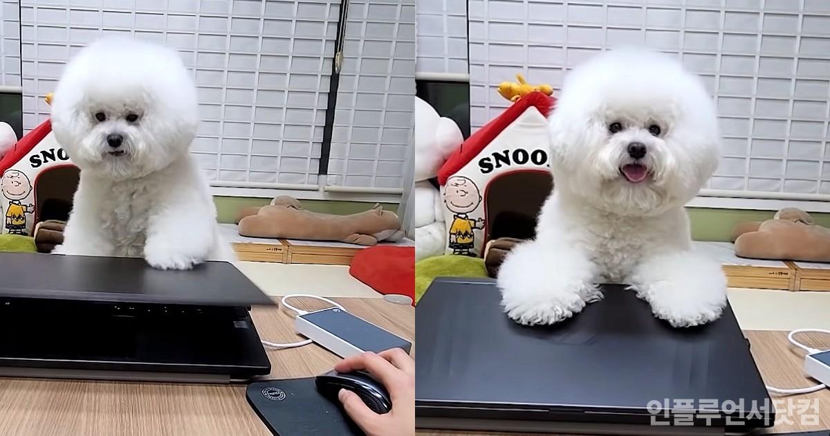 """일할 때마다 달려와 노트북 덮어버리는 강아지...""""놀아주세요!"""""""