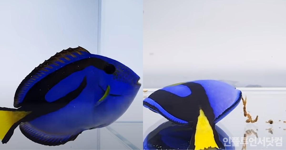 민물욕 시작한 바닷물고기 '블루탱'의 신들린 연기력